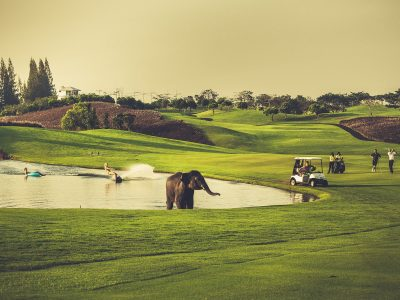 Black Mountain Golf Club & Resort (8)
